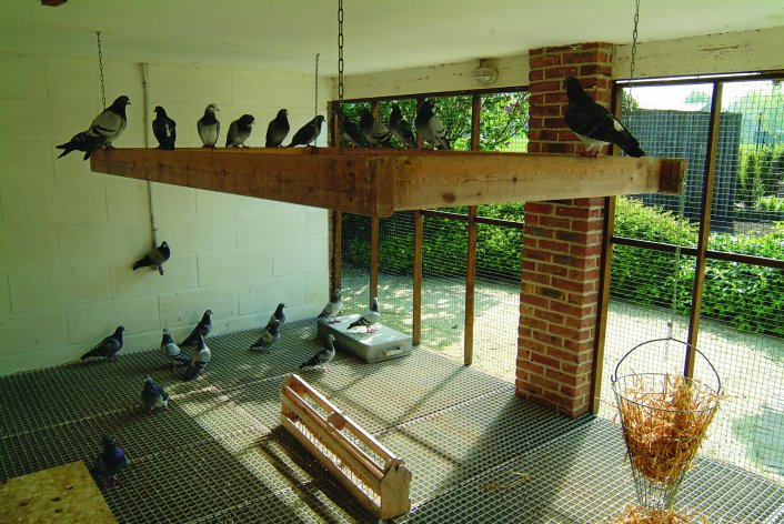 Stockloft: breeders relaxing in their aviary. They like to carry the straw to their nests.