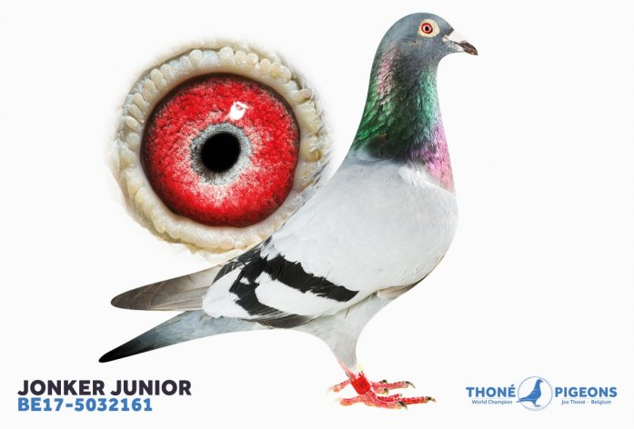 'Jonker Junior' - 1. Nat. c. Argenton – fastest 2.886 birds