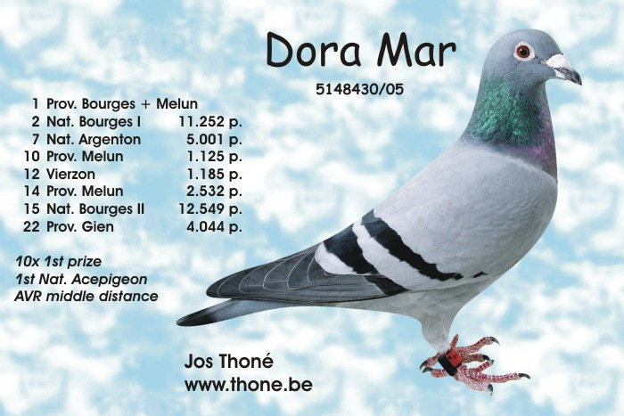 Dora Mar, 1st. National Acepigeon AVR middle distance