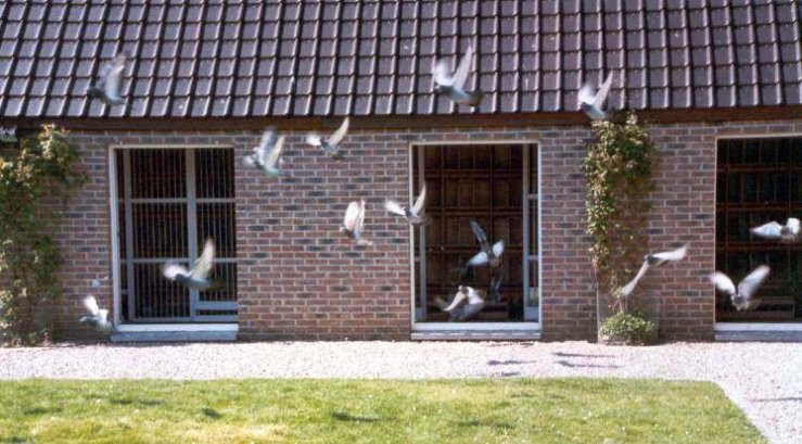 Pigeons enter and exit through large windows