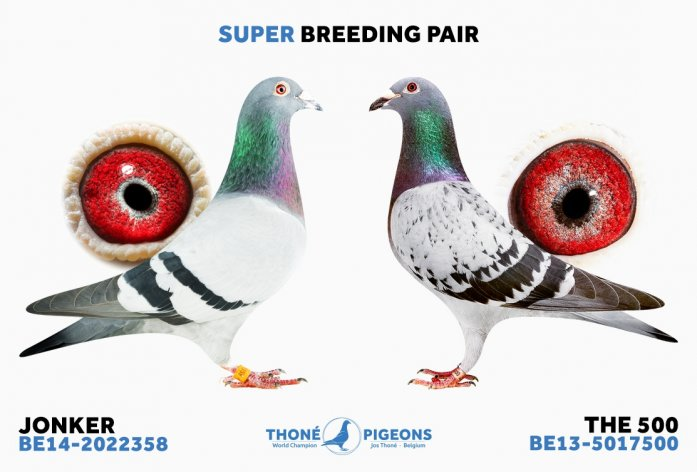 Exceptional breeding pair: 'Jonker' and 'The 500'